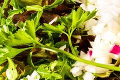 Salade van verse groenten Stock Afbeeldingen