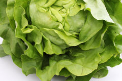 Salade verte Photos stock