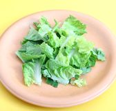 Salade verte Images stock