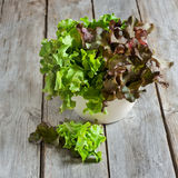 Salade verte Photographie stock