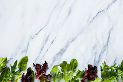 Salade verte d'herbes images stock