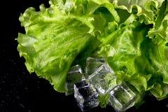 Salade verte et glaçons sur la table humide noire Foyer sélectif images stock