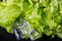 Salade verte et glaçons sur la table humide noire Foyer sélectif Photographie stock libre de droits
