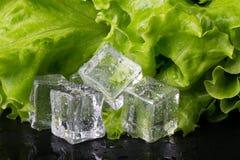 Salade verte et glaçons sur la table humide noire Foyer sélectif Photos libres de droits