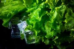 Salade verte et glaçons sur la table humide noire Foyer sélectif T image libre de droits