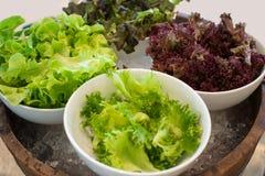Salade verte et rouge mélangée fraîche dans une fin de cuvette  Photo stock