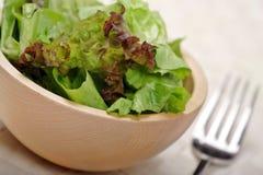 Salade verte fraîche images stock