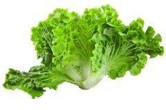 Salade verte fraîche d'iceberg d'isolement sur le fond blanc Image libre de droits