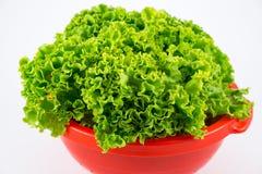 Salade verte fraîche dans une passoire en plastique image libre de droits