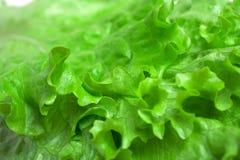 Salade verte fraîche de laitue images stock