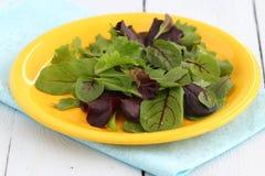 Salade verte mélangée fraîche Photographie stock libre de droits