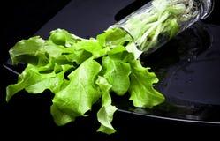 Salade vivante fraîche Photos libres de droits