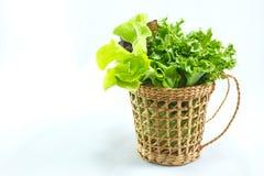 Saladeachtergrond Stock Afbeeldingen