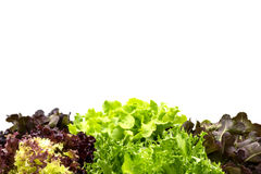 Saladebladeren met copyspace Royalty-vrije Stock Fotografie