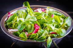 Salademengeling Royalty-vrije Stock Foto