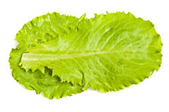 Salades Stock Foto