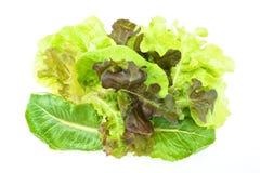 Saladevegetariër op roze die dienblad met witte achtergrond wordt geïsoleerd Royalty-vrije Stock Foto's