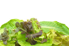 Saladevegetariër op roze dienblad Stock Fotografie
