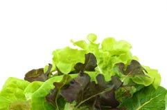 Saladevegetariër op witte achtergrond Royalty-vrije Stock Afbeeldingen
