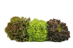 Salads. Three salads isolated on white background Stock Photography