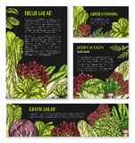 Salads and leafy lettuce vector templates posters. Lettuce salads vector posters templates. Vegetarian food leafy vegetables of chicory and watercress, sorrel Royalty Free Stock Image
