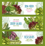 Salads leafy vegetables vector banners set Royalty Free Stock Image