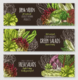 Salads and leafy vegetables vector banners set Royalty Free Stock Photography
