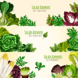 Salads or leafy vegetables vector banners set Royalty Free Stock Photos