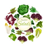 Salads poster of vector green leafy vegetables Royalty Free Stock Images