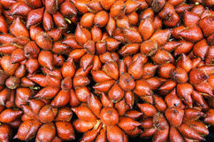 Salak Foto de Stock Royalty Free