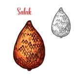 Salak o frutta del serpente dello schizzo indonesiano della palma Fotografie Stock Libere da Diritti