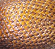 Salak snake fruit texture. Salak. Balinese snake fruit scales close up stock photo
