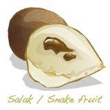 Salak, wąż owoc/ ilustracja wektor