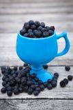 Salal莓果,白珠树shallon 库存图片