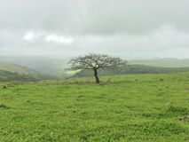 Salalah Royalty Free Stock Photos
