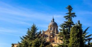 Salamanca drzewa i katedra zdjęcie stock