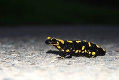 salamander пожара Стоковое Фото