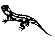 Salamander Royalty Free Stock Photo