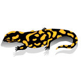 Salamander. Black and yellow salamander amphibian vector illustration stock illustration