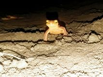 Salamander creeping night cutie stock image