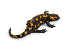 Salamander de incêndio Imagem de Stock Royalty Free