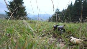 Salamander in de Wildernis stock footage