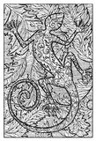 Salamander, fire lizard, hand drawn illustration. Hand drawn vector illustration. Engraved line art drawing, black and white doodle. See all fantasy collection Stock Image