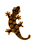 Salamander macchiato con il reticolo sulla parte posteriore Fotografia Stock Libera da Diritti