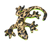 Salamander Royalty Free Stock Images