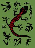 Salamander vector Stock Photos