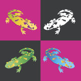 Salamanders in color. Four brightly colored salamanders on a contrast background. Feel a vibrancy of color Stock Photos
