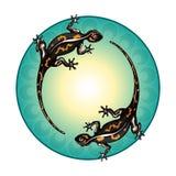 salamanders Grön cirkel, modell royaltyfri illustrationer