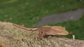 Salamandra almacen de metraje de vídeo