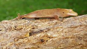 Salamandra metrajes
